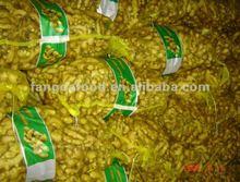fresh Jahe Gajah/fresh yellow ginger