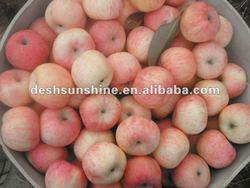 High Quality Fresh Fuji Apple ( 100-138, 150-198 )