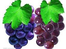 Grape Seed Extract Powder, Health Care, Grape Seed 98% 95%