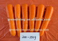 2014 hot vegetable---Fresh Carrot