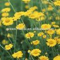 Hochwertige wilde Chrysantheme-Blume P.E.