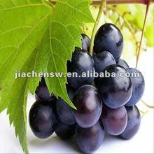 100%Natural Organic Grape Powder Extract
