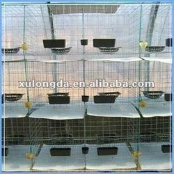 pigeon metal cage