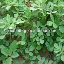 furostanol saponins/Common Fenugreek Seed