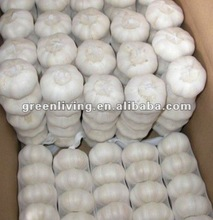 pure white garlic price 2012 in china ( 5.5cm,10kg mesh bag)