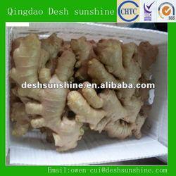 Export 2012 new crop ginger buyers