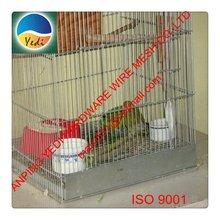 hot sale high quality of live pet birds