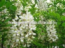 Quercetin Powder(Sophora japonica extract)