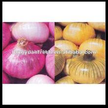 china wholesale fresh onion