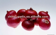 Fresh Shallot Onion (5cm,7cm,9cm)