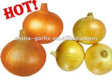 Organic Fresh Yellow Onion---wholesale price