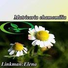 ISO Certificated Matricaria chamonilla Extract