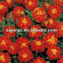 Marigold P.E.(Lutein)5%-90%