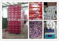 Organic Garlic Supplier/Garlic Farm