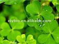 Alfalfa folha p.