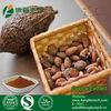 6% Theobromine Theobroma Cacao Extract powder