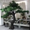 /product-gs/lxy080842-home-decoration-fake-podocarpus-macrophyllus-tree-ornamental-plants-artificial-pine-tree-60004283190.html