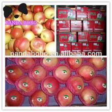 Royal Gala apple red apple for Sir lanka/Bangladesh/Thailand