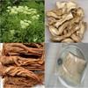 Radix Angelicae Sinensis extract Ligustilide