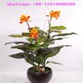 lxy080855 shengjie artificiale fiore falso pianta fiore tropicale ornamentali piante bonsai pianta artificiale