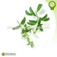 stevia powder china supplier /Plant extract stevia