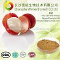 Alta qualidade de ervas em pó de frutas litchi extrato/litchi extrato da semente