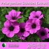 100% natural pelargonium sidoides extract