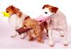 Groupon Pet Masks Dog High-Quality Soft Anti Bark Muzzle Silicone Muzzle Dog Masks