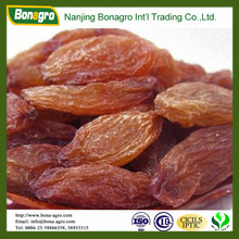 XINJIANG Red raisin, good price