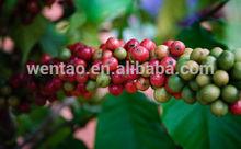 green organic arabica coffee bean with wholesale price