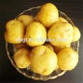 Congelados de la patata de la patata / papa de almacenamiento en frío / de fábrica de la patata