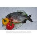 Toda rodada congelado peixe de água doce para venda