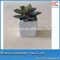 Decorativa mini-artificial suculentas planta bonsai