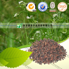 Chinese Herb Medicine And Factory price Pepperweed Seed