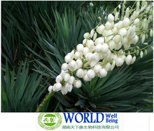 Supplier Yucca Extract tribulus terrestris saponins /soy saponins/100% Nantural Yucca Extract