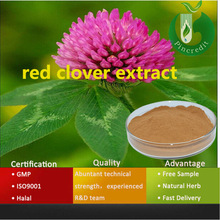 Herbal extract red clover extract for antibiotic