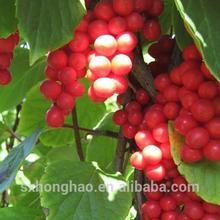 Natural palnt extract schisandra p.e.