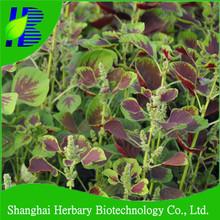 Organic red leaf amaranth seed/ purple leaf amaranth seed/green leaf amaranth seed