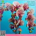 Orquídea flor de seda artificial, flor artificial fabricante na china