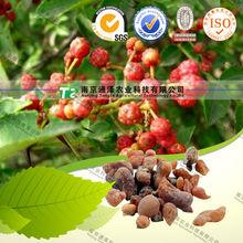 Natural herb medicine Boswellia carteri