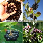 Factory Supplier Acai Berry Extract Powder 4:1 5:1 10:1