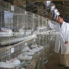 Rabbit Farming Cage Material