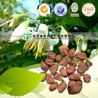 100% Pure Natural Herbal Plant Sambrani