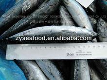 Congelado Bonito peixe 150 - 200 G 19 CM +