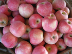 Fresh fuji apple price