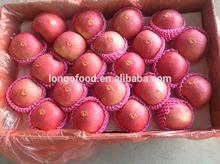 New crop China fresh green apple fruit export