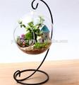 sfera di vetro trasparente vaso dipinto tulipano