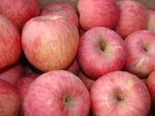 2014 Chinese fresh gala apples