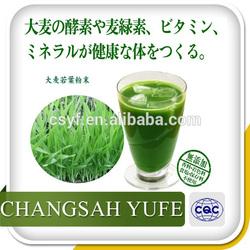 Natural pure barley grass juice powder, barley green powder