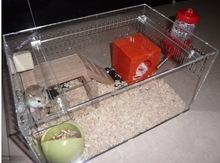Exquisite clear acrylic hamster cage for sale